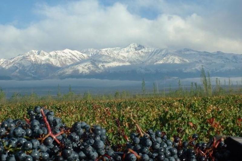 Dicas de Viagem Chile   Lugares Que Quero Conhecer Santiago Plantação