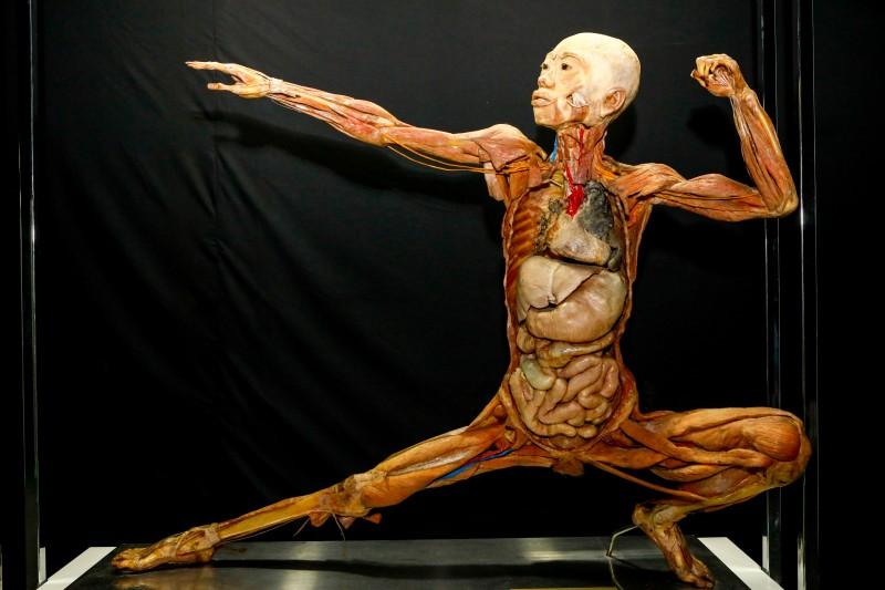 Iguatemi Campinas | Exposição Maravilhas Do Corpo Humano-