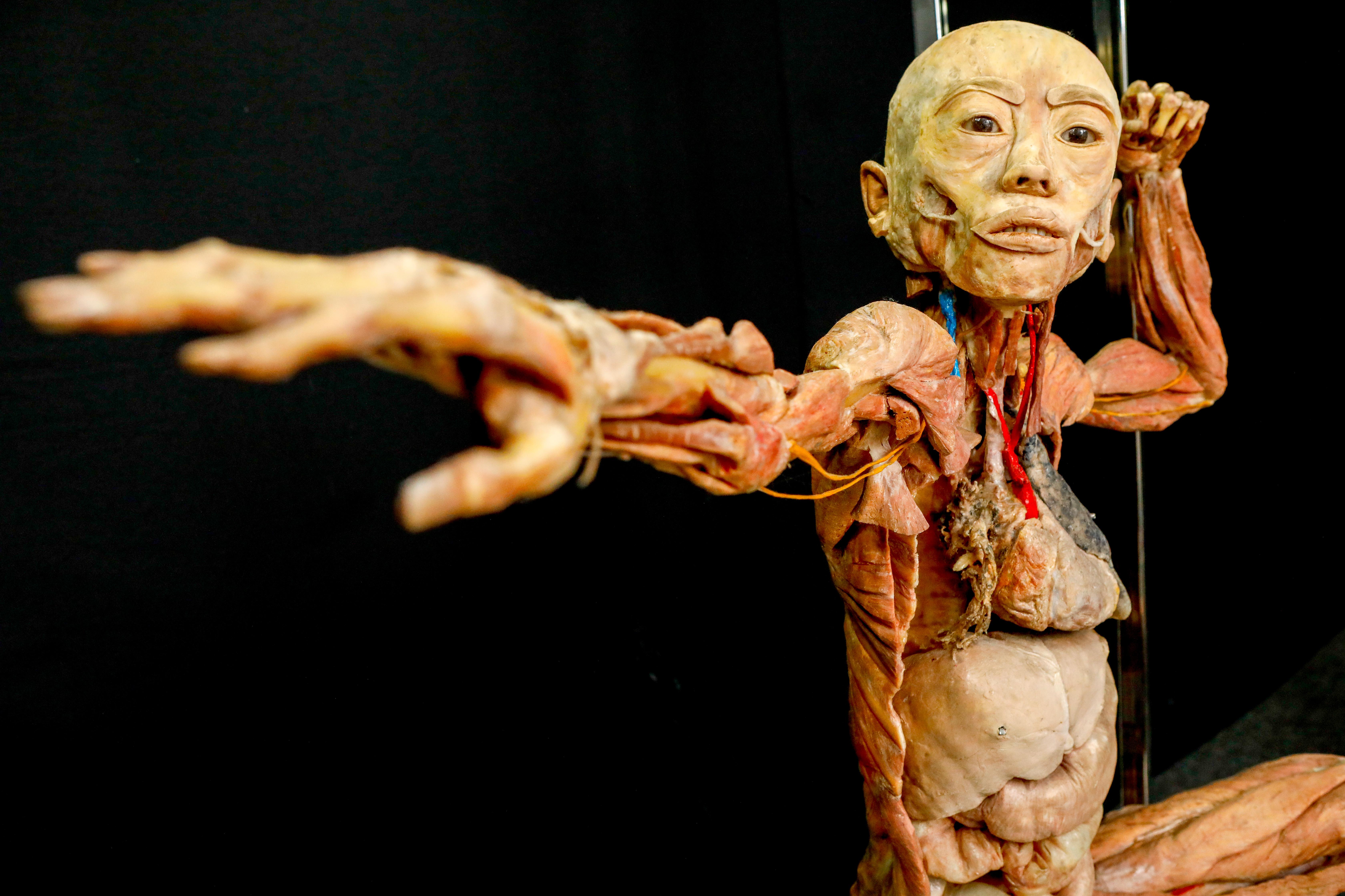 Iguatemi Campinas | Exposição Maravilhas Do Corpo Humano